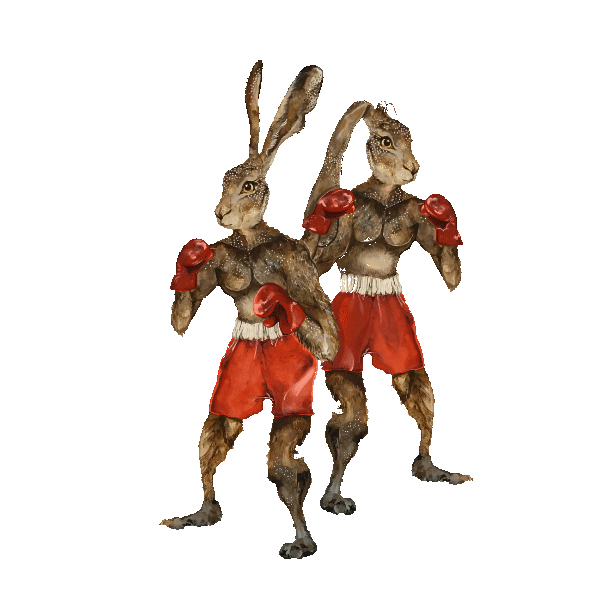 An illustration of two boxing hares